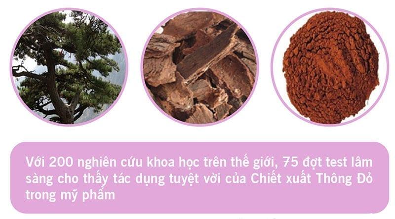 Gia công mỹ phẩm chiết xuất từ tinh chất thông đỏ (Pinus Pinaster Extract) 1