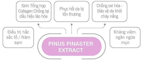 Gia công mỹ phẩm chiết xuất từ tinh chất thông đỏ (Pinus Pinaster Extract) 2