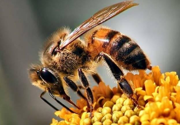 Gía Công Mỹ Phẩm Chiết Xuất Nọc Ong